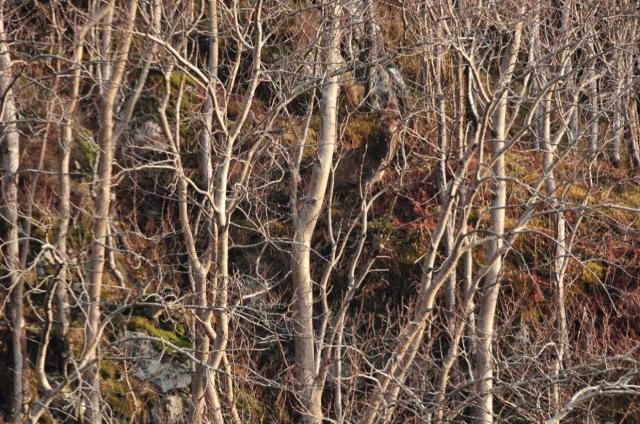 Spot The Deers