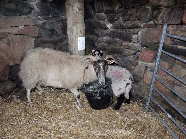 Invalid with Mother in the Barn