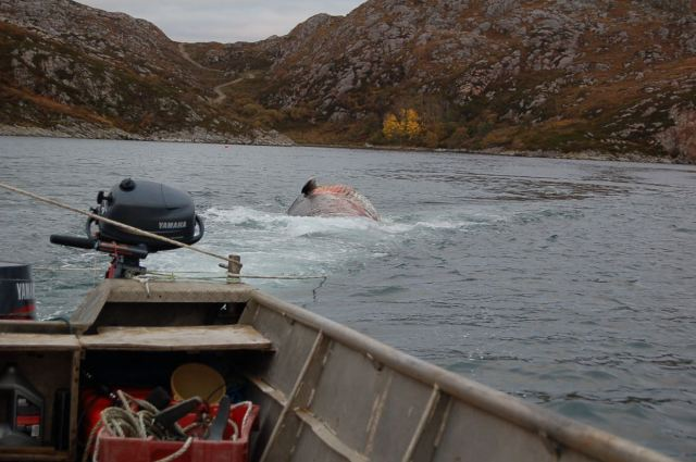 Ever Tried Towing a Whale Backwards