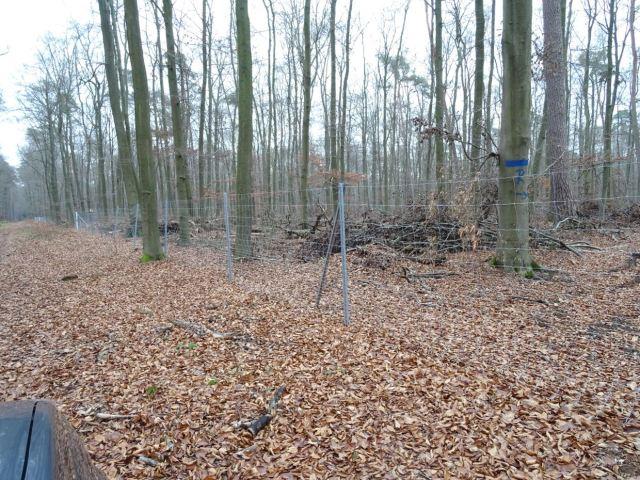 Deutsch Forestry