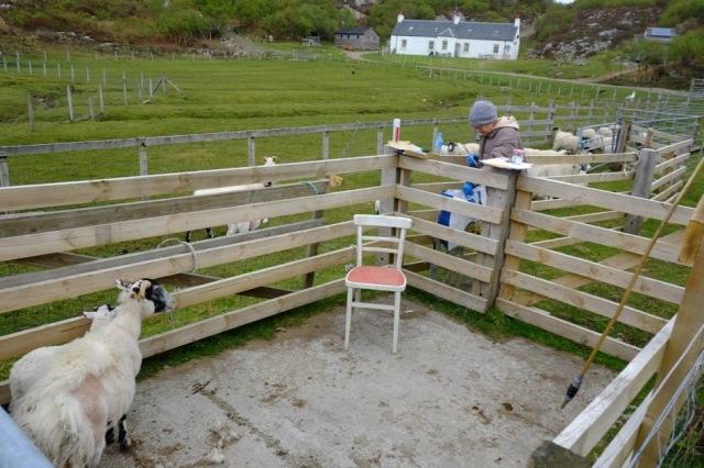 Overcast, sheepwork day