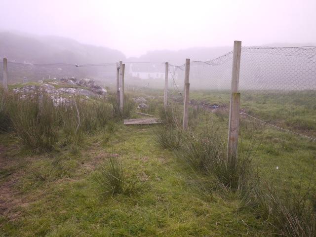 Followed by Fog