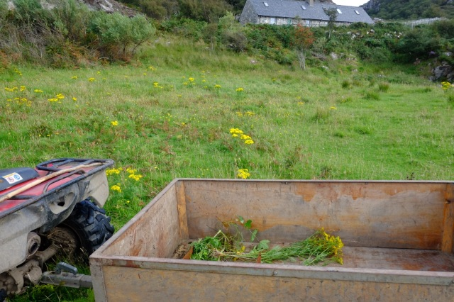 The Annual Ragwort Pull