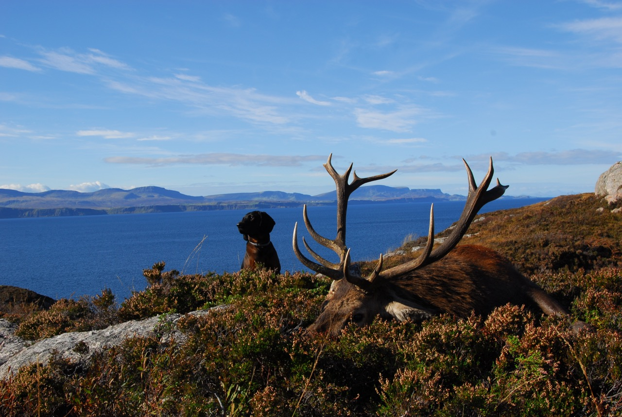 Exceptional Old Stag, Magnar, the dog, Not Impressed