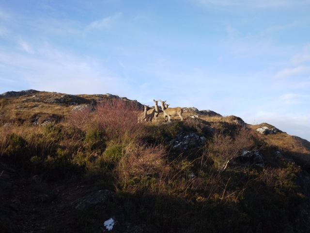 Hinds On The Hill on The Way To Dry Harbour.