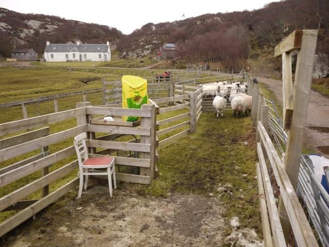 Pre-lamb Dosing